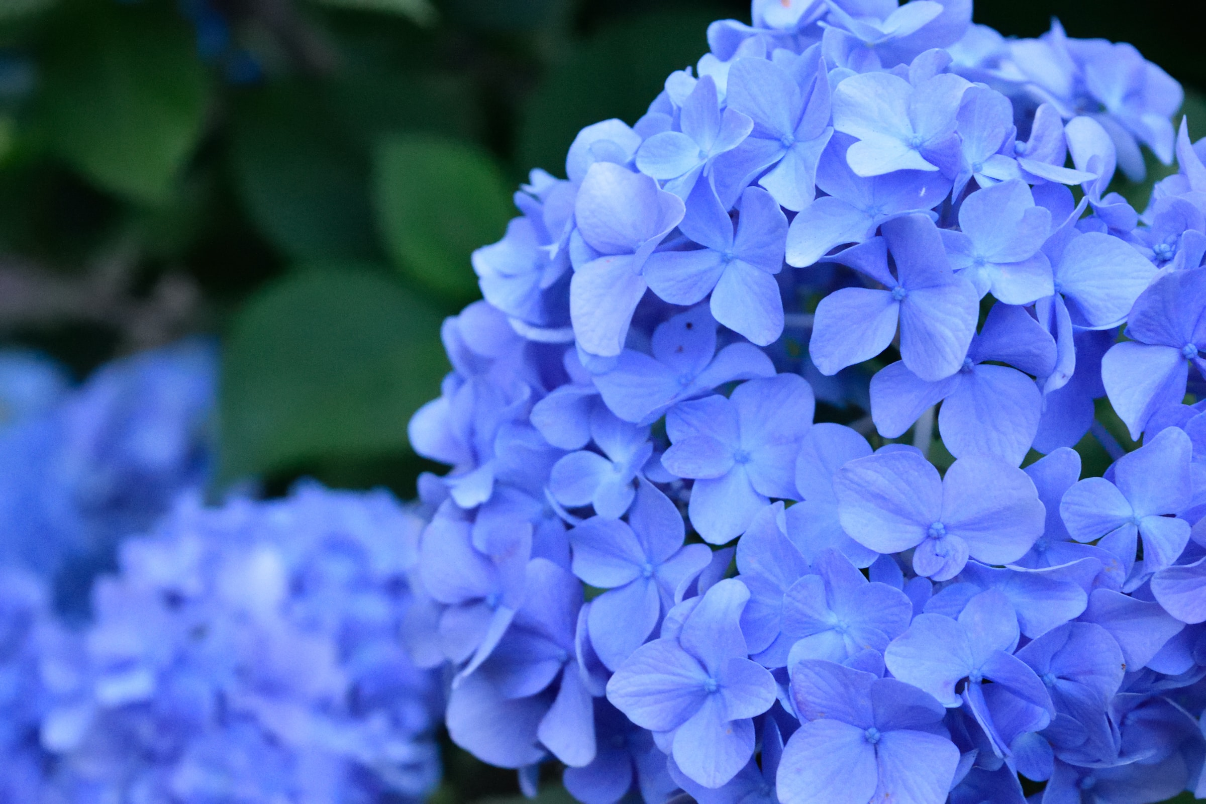 5 Best Plants That Will Surely Make Your Garden Glow