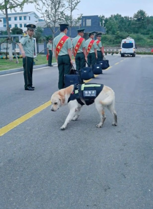 A commander ordered Niuniu to return to the kennel before he sent off the retiring soldiers