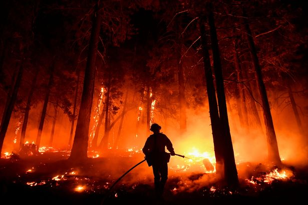 Last year a wildfire in the region killed thousands of sequoias, some as tall as high-rises and thousands of years old
