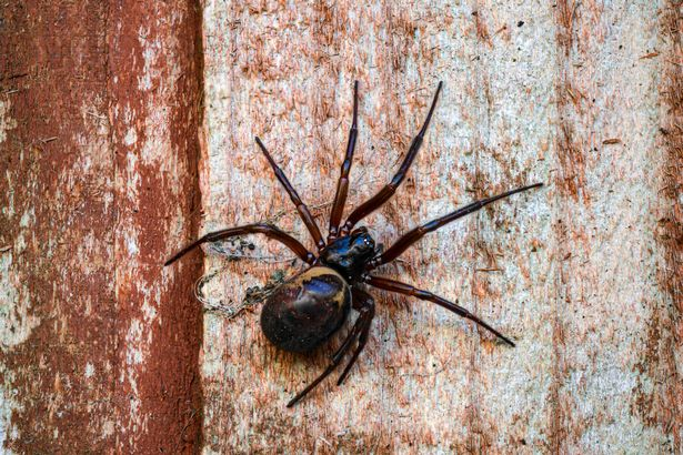 The spiders are most commonly sighted between July and November