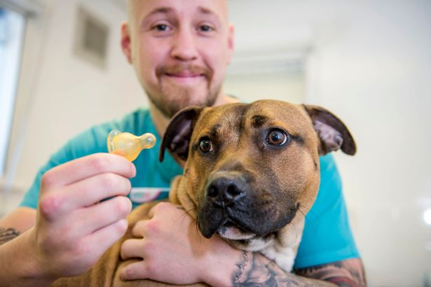 A PDSA vet assistant with Diesel who swallowed a baby's bottle teat