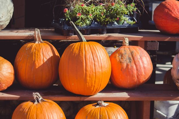 Pick out your pumpkin and get carving!