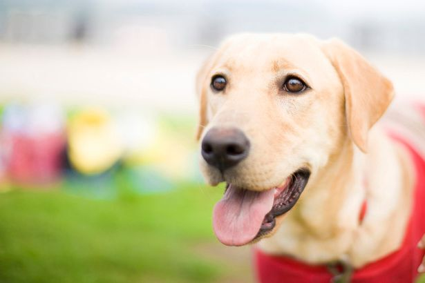 Dog owners switching from a collar to a harness could actually be breaking the law