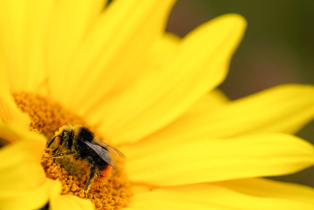 Feeling a spark: Flowers release perfume due to electricity of bee's touch