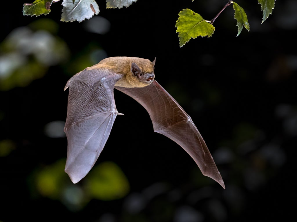 Man dies of rabies after denying treatment when bitten by bat from colony in his home