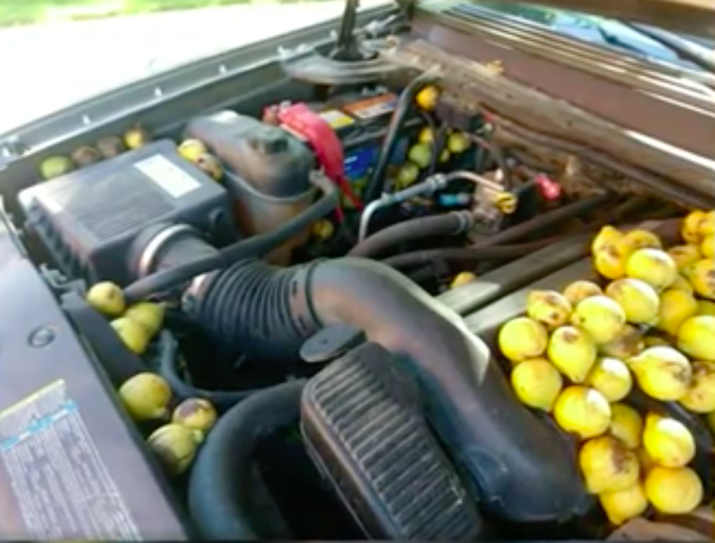 Man discovers squirrel stashed 42 gallons of nuts in his van