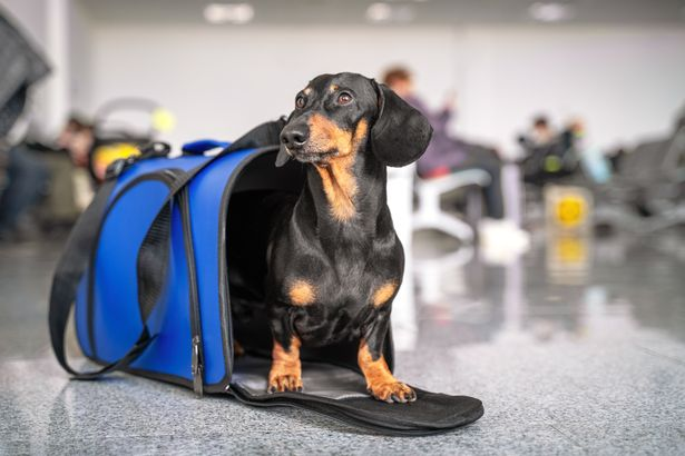 Travel rules for dogs can be quite confusing