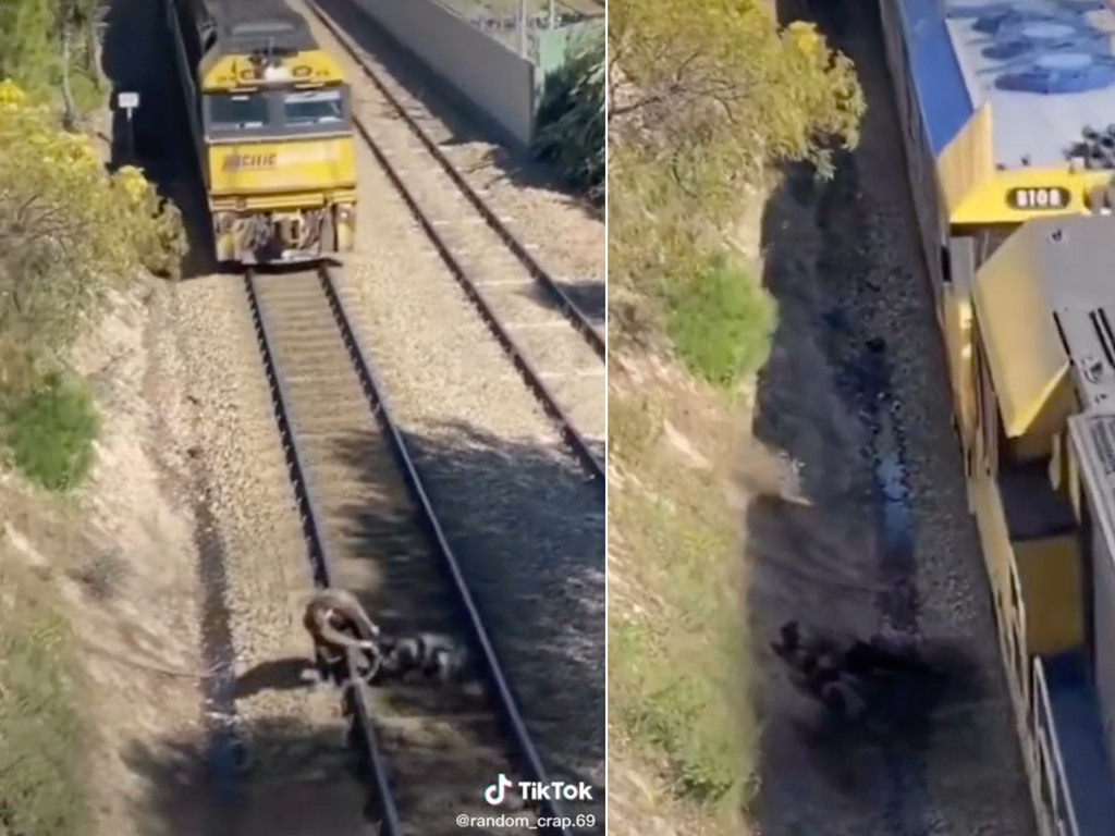 Viral TikTok of a man rescuing a dog from train tracks accused of being fake