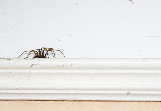 Spiders like to hang around your bins before heading inside