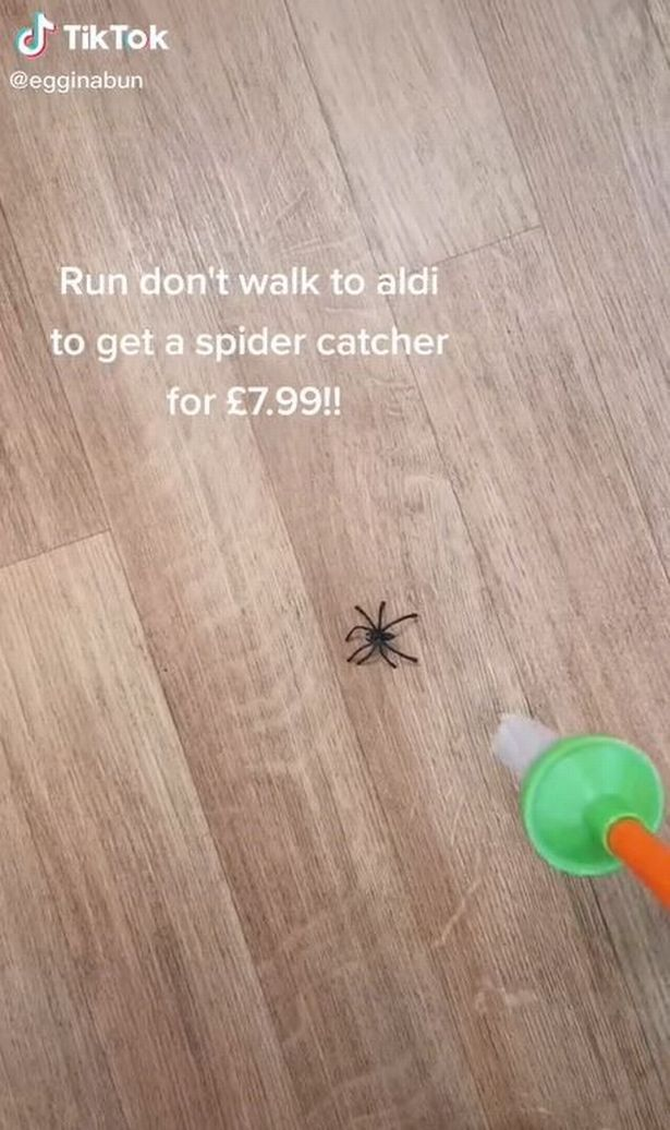 Spider on wooden floor