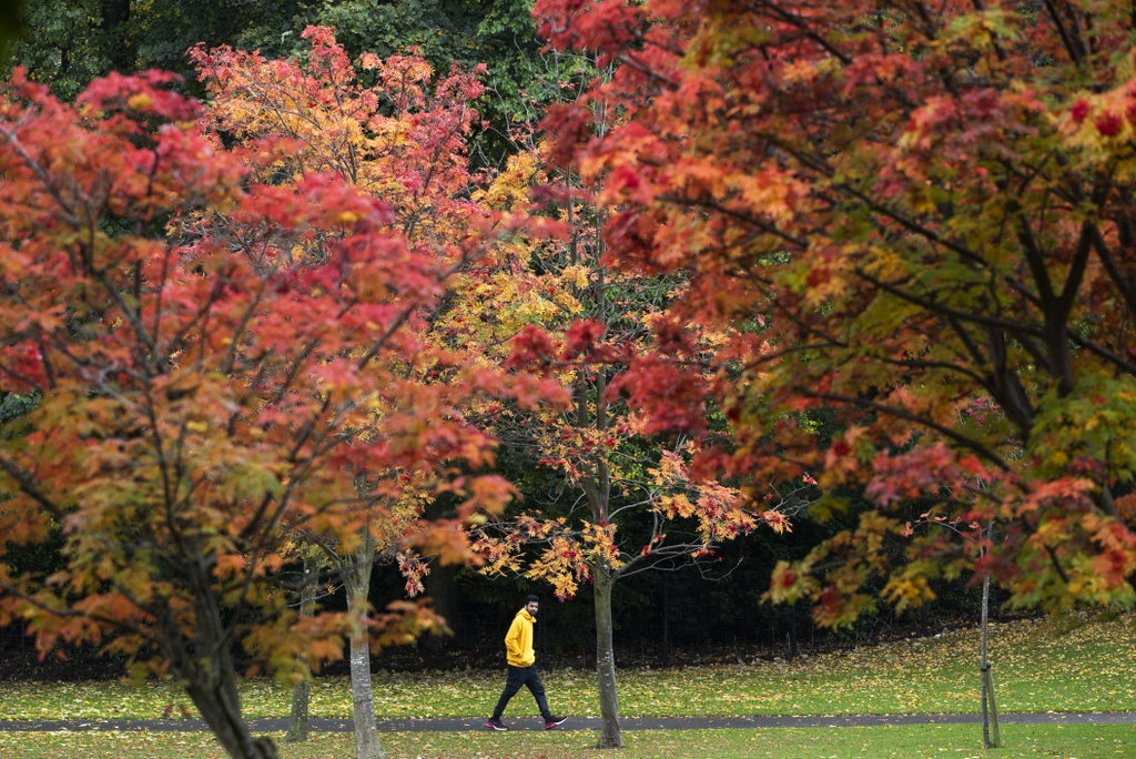 National Trust predicts good year for autumn colour
